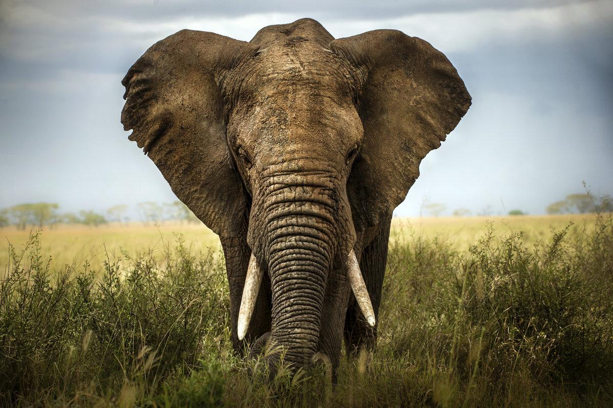 Картинки африканские животные, картинки