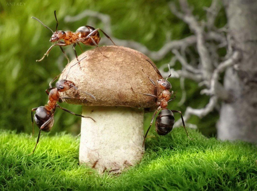 Картинки муравьи, сделать открытку бумаги