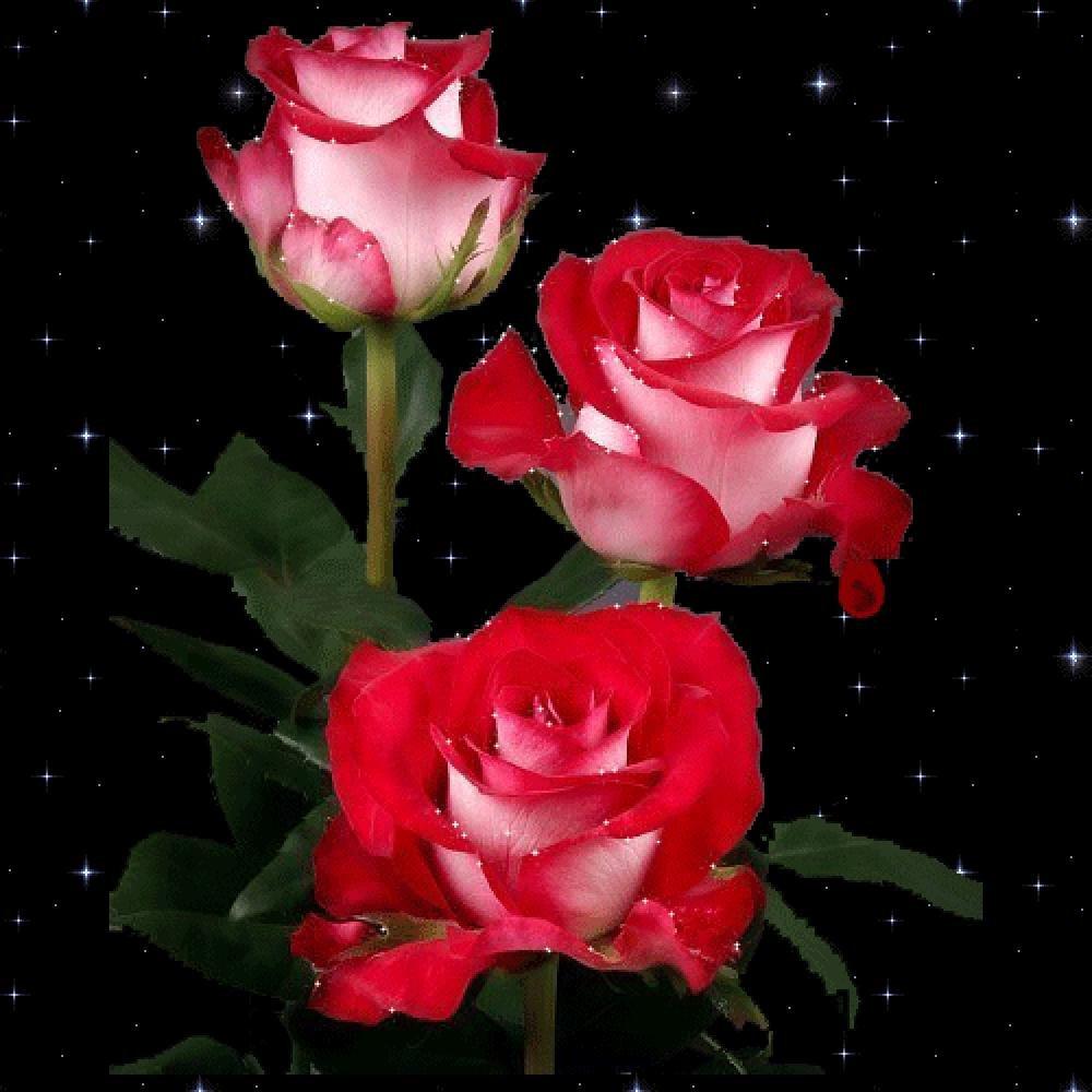 Днем, анимированные картинки розы 320-240 в хорошем качестве