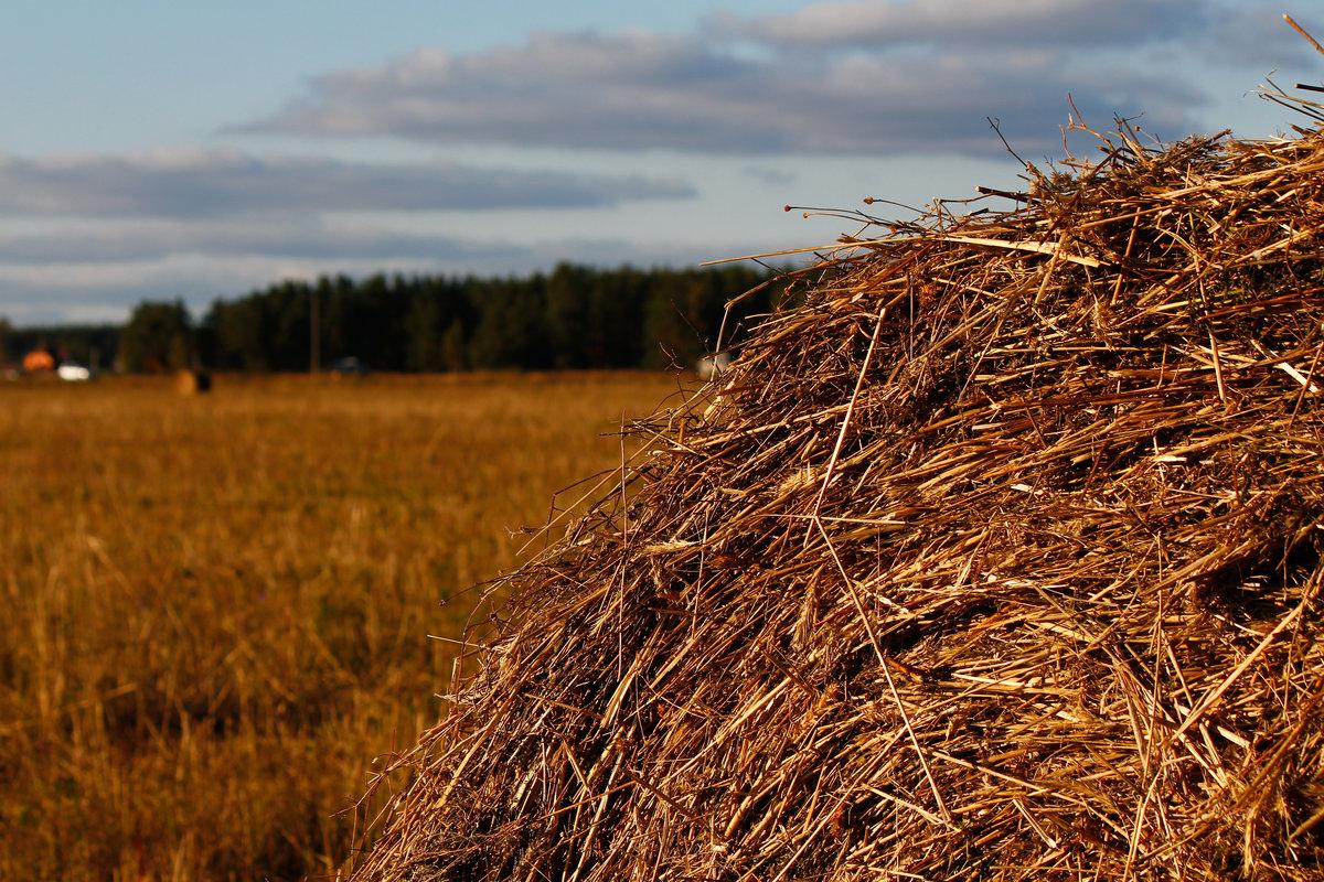 правильно фотографировать фото полей в сентябре для фотографий эту инструкцию