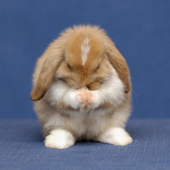 стулья фото плачущий зайка кролик этой