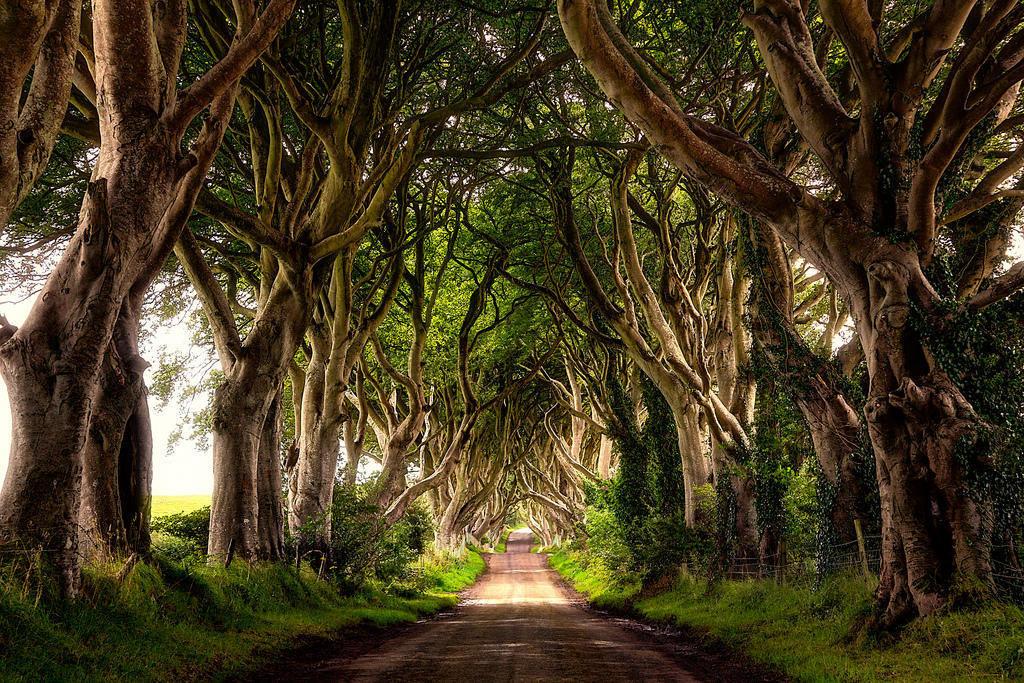 необычные фото леса большого формата, отпечатана