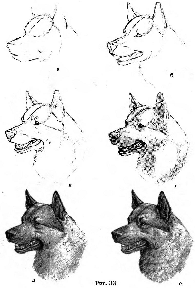 Картинки карандашом уроки рисования