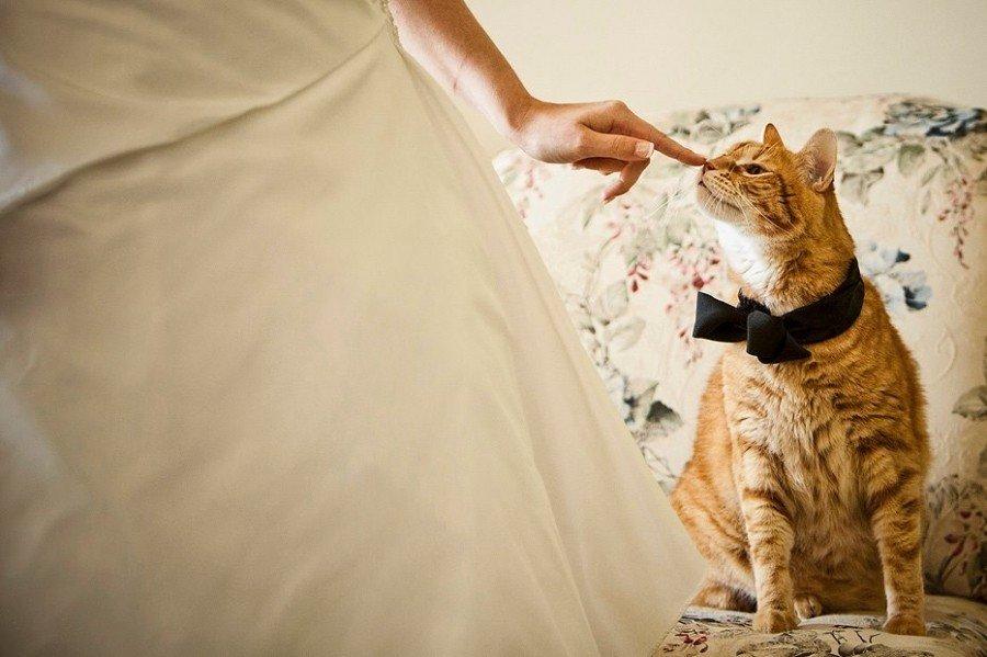 Свадьба кошка картинки