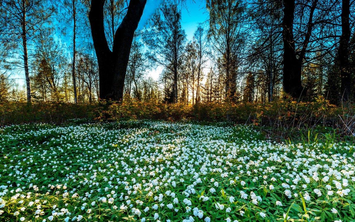 Картинки красивые природы весной