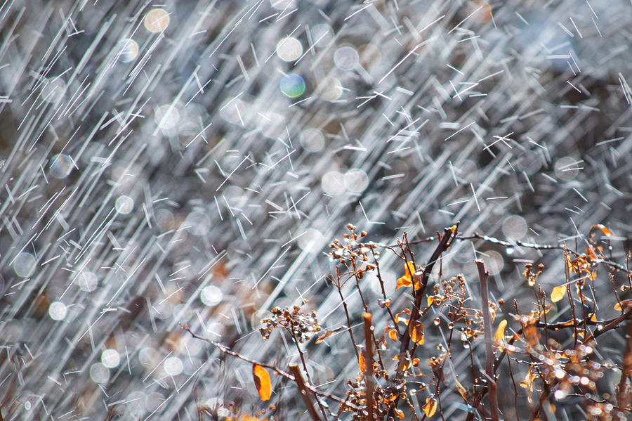 Темнокожих золотой дощ фото невесту фото