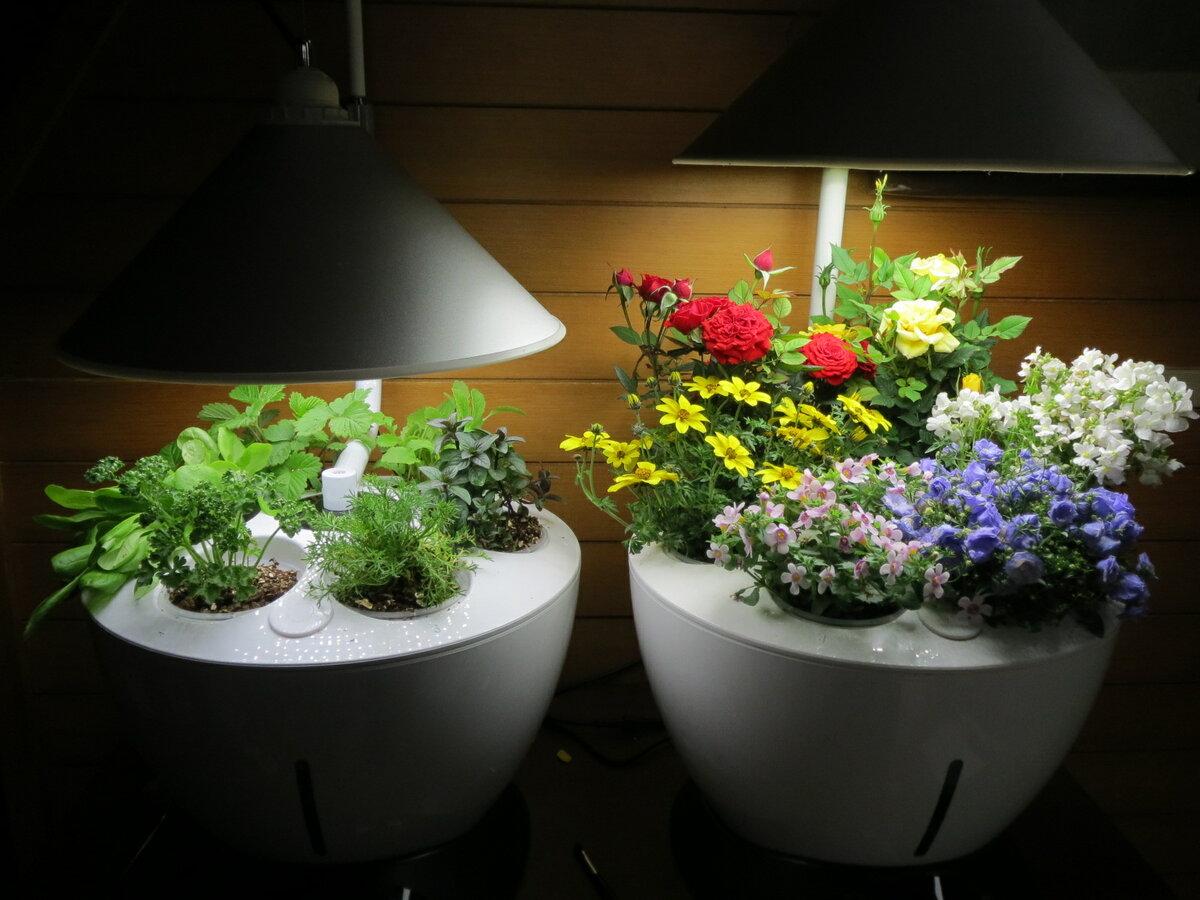 освещение цветов