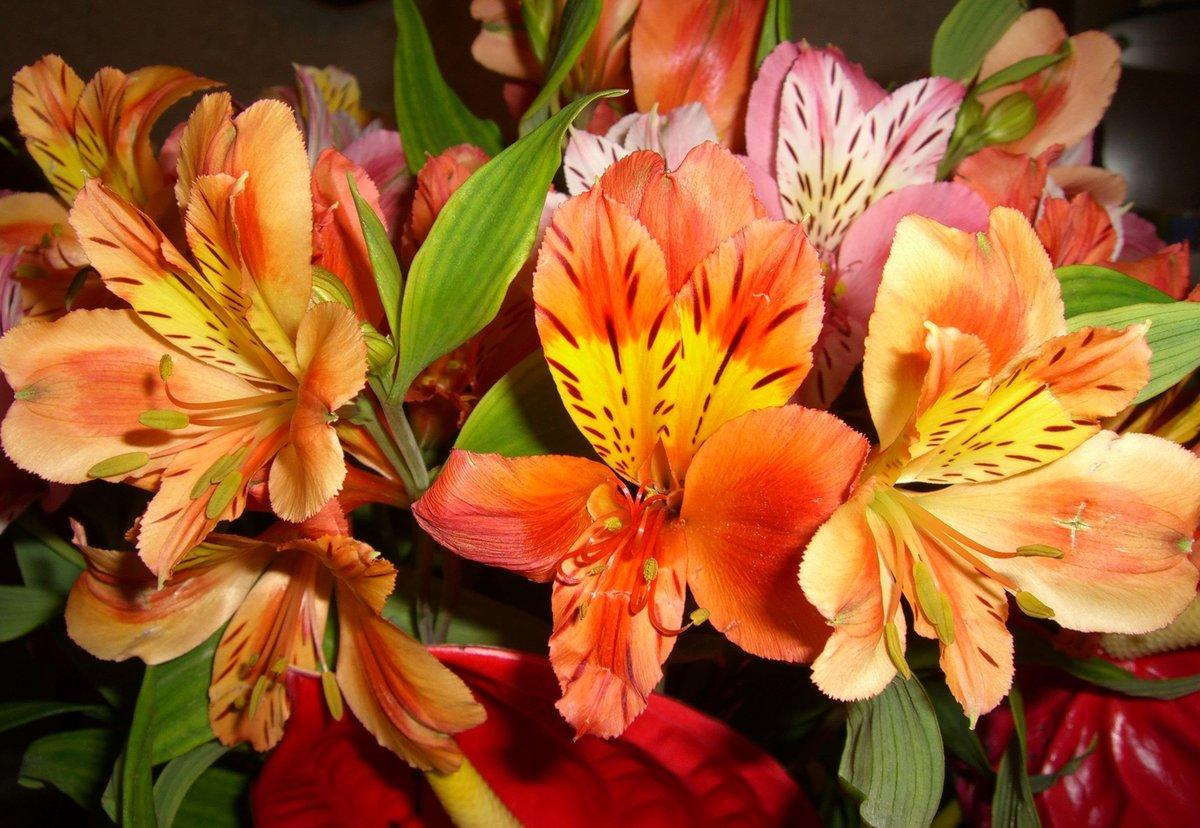 Киндеров казань, цветы в букетах и их название