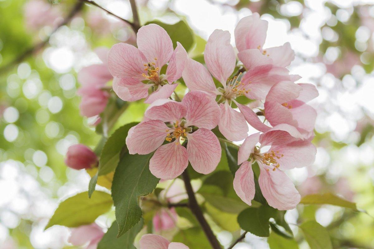 Радостного дня, открытки с яблоневым садом