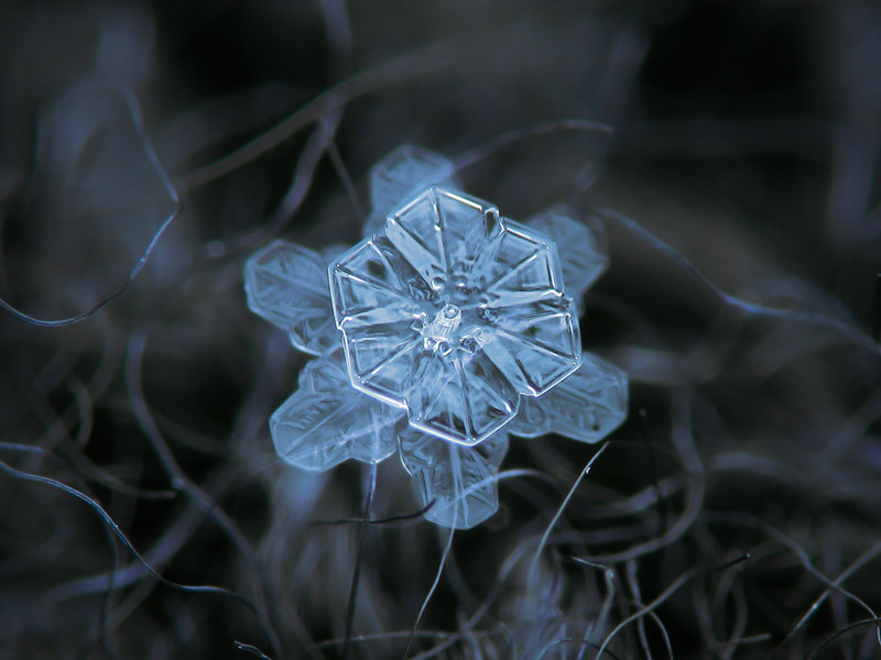Pack of four real snowflake macro photos, captured on dark w