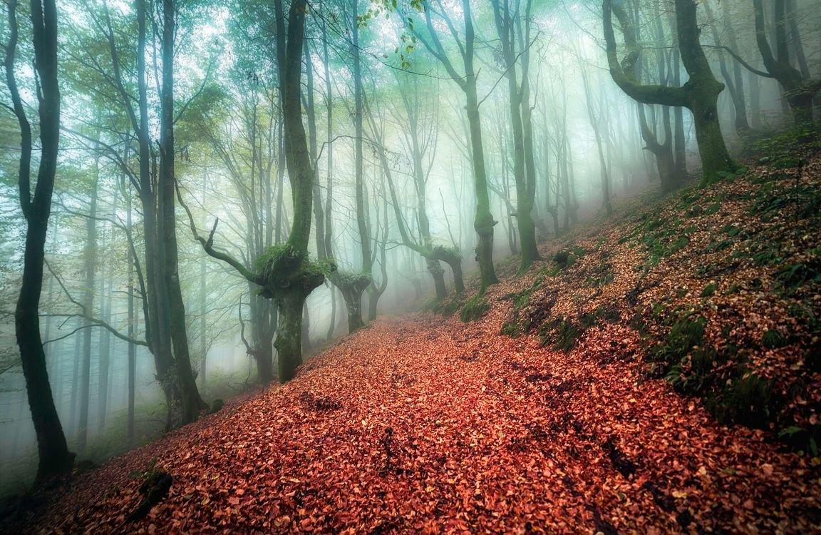 Большие деревья в тумане на склоне.