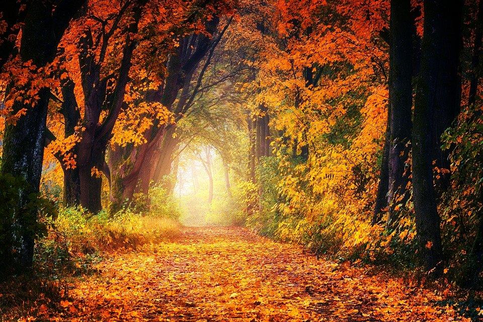 Загрузите эту бесплатную фотографию о Осенью Проспект Далеко из обширной библиотеки изображений и видеообъявлений общего пользования Pixabay.