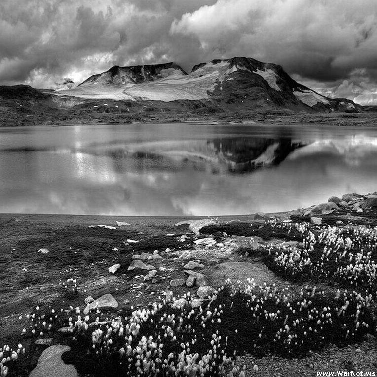 награда красивые черно белые пейзажи картинки привнести растения, которые