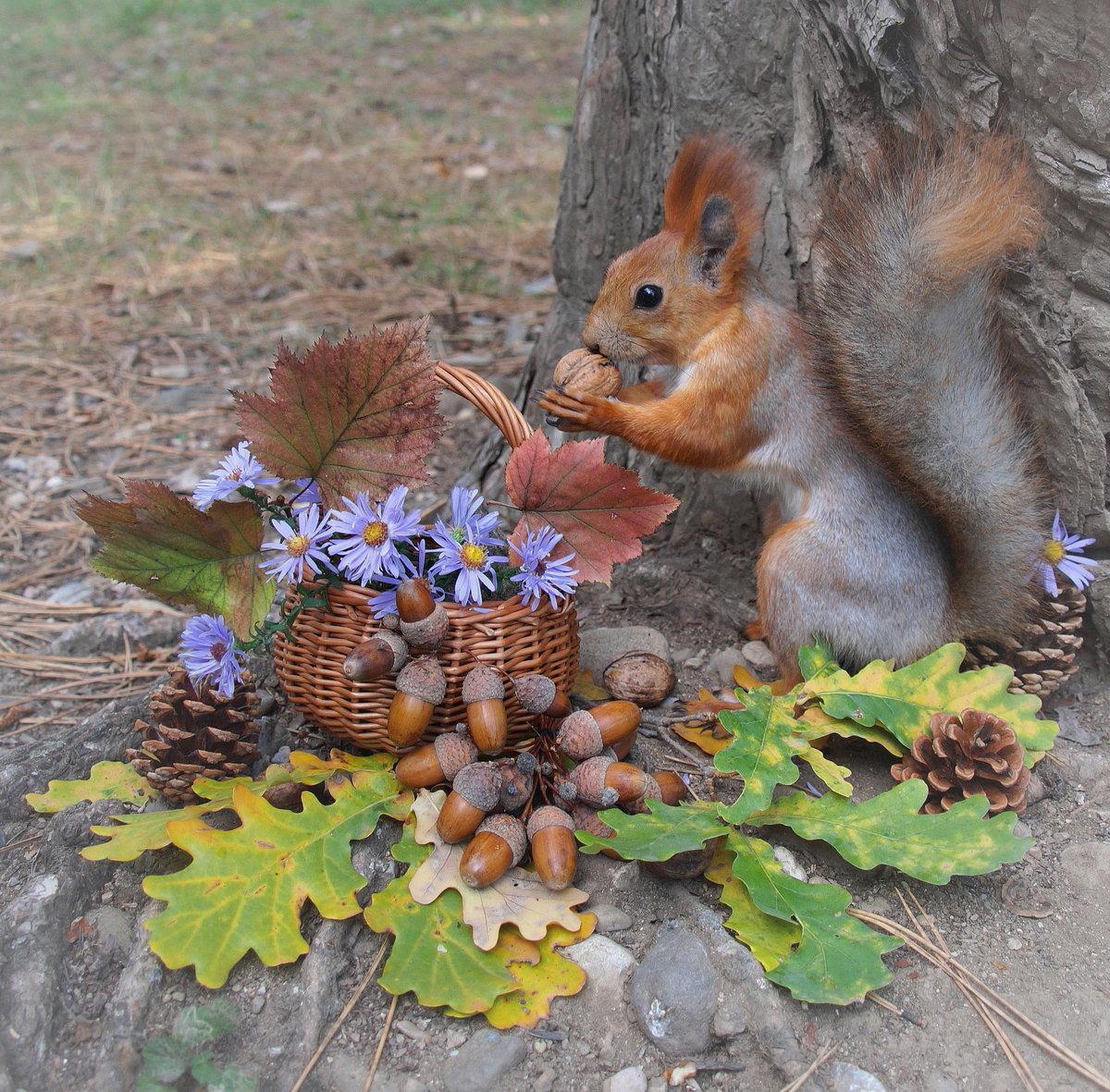 Щедрая осень. #белки#осень#НаташаС