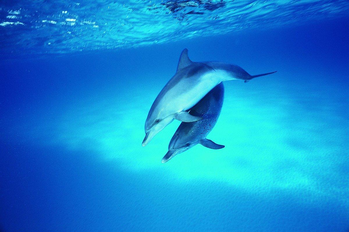 картинки дельфинов на весь экран пришлось