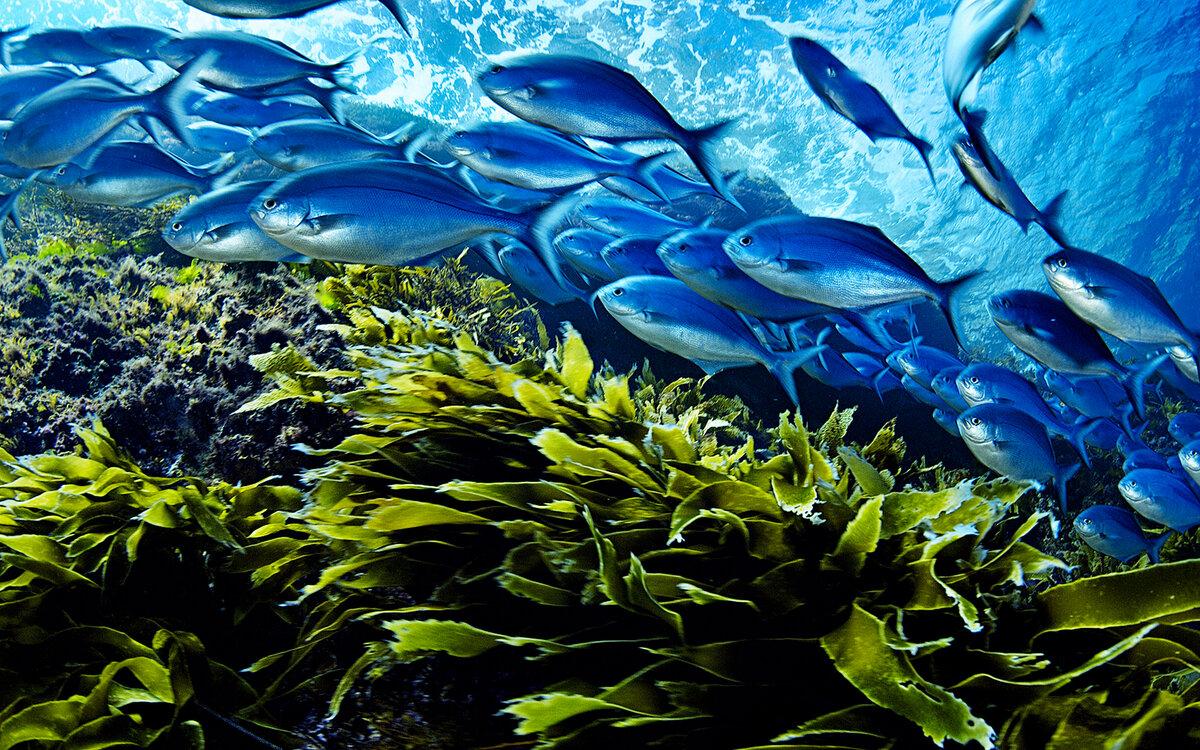 Морской коллаген - омолаживающие свойства, из чего делают
