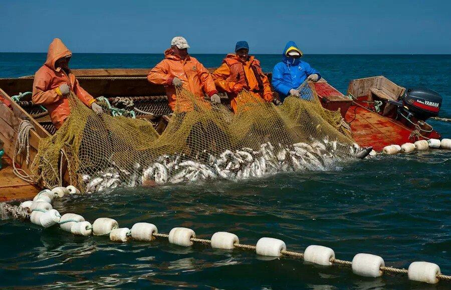 Более 361 тысячи тонн рыбы и морепродуктов добыли предприятия Сахалина с начала года