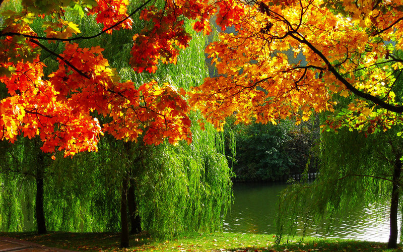 картинки для рабочего стола природа осень