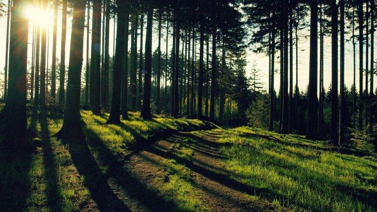 картинки для рабочего стола лес