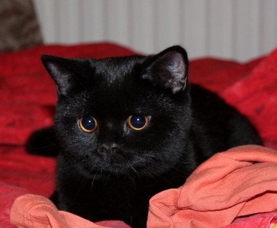 кот черный картинка