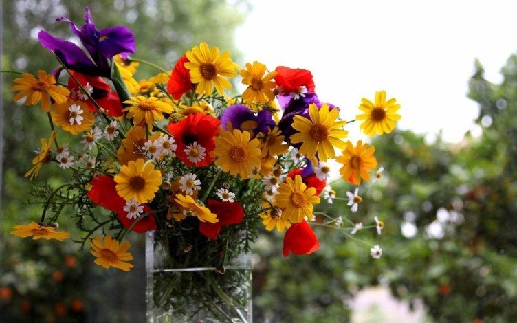 Фото цветов ярких
