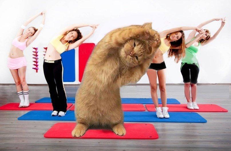 Смешная картинка про фитнес