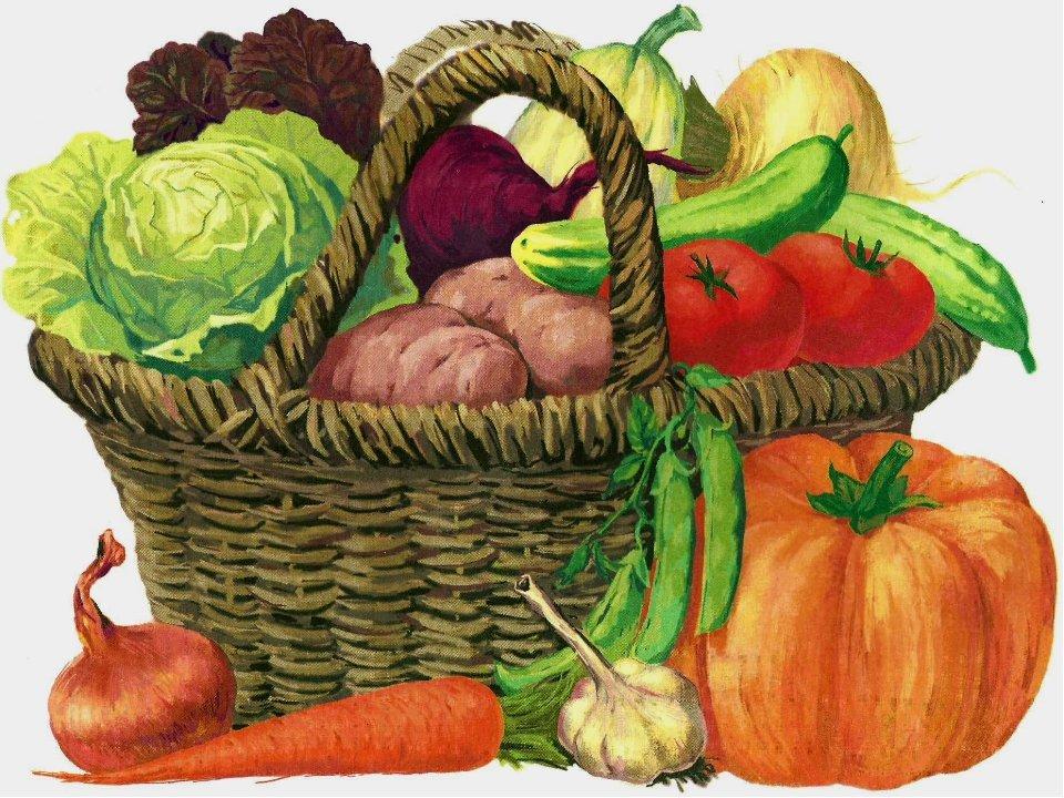 Картинки овощи с грядки для детей
