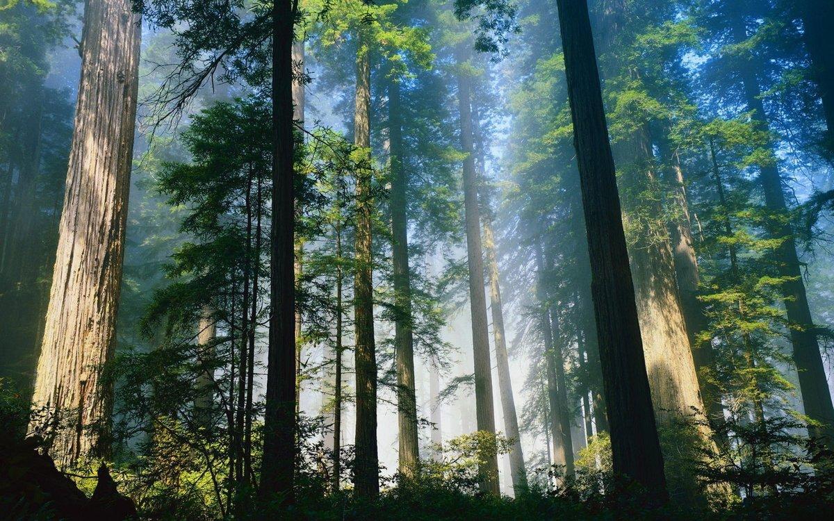 Днем рождения, лес открытки