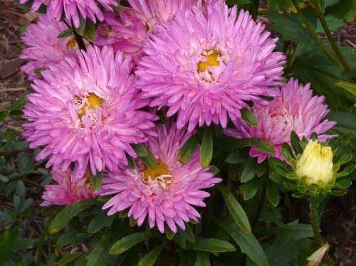 Все о садовых цветах фото и описание