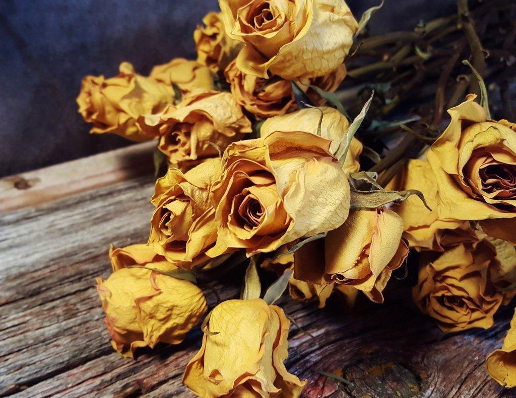 Сухие розы в открытках