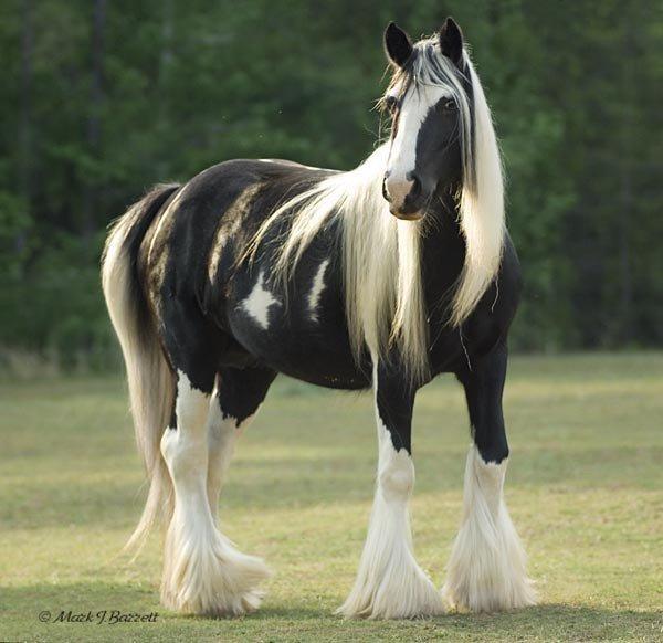 100 великолепных фотографий лошадей. Обсуждение на LiveInternet - Российский Сервис Онлайн-Дневников