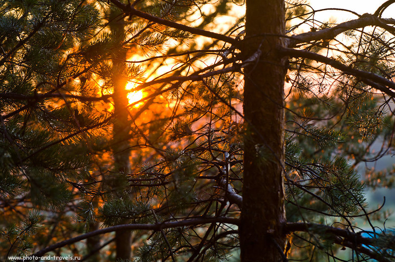 2. Закат в лесу. Снято на Никон Д5100 и телеобъектив Никкор 70-300