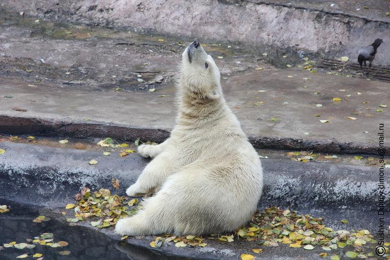 Белый медведь - Дмитрий Сушкин