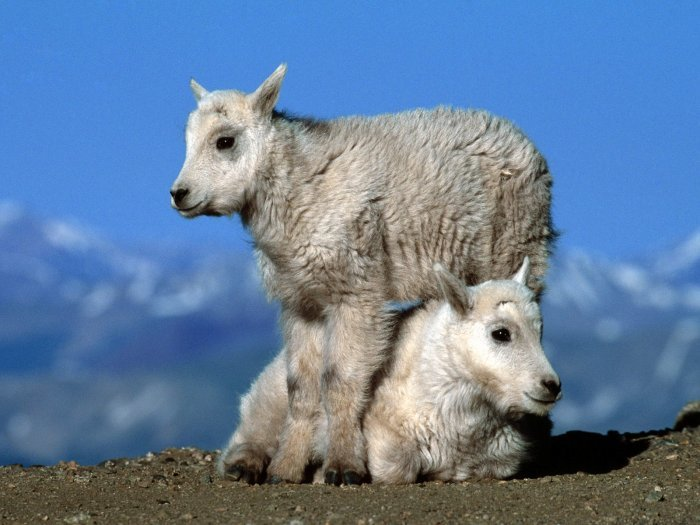 Дикие животные (46 фото) » Клопик.КоМ - сайт любителей животных