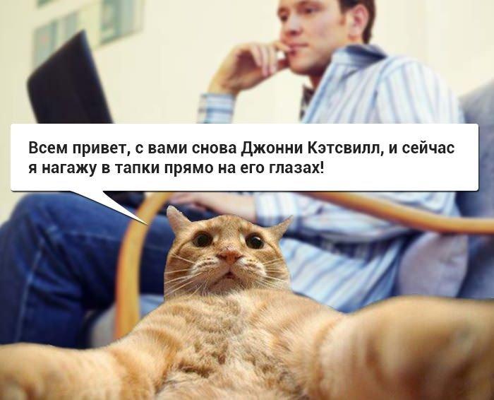 Джонни Кэтсвилл  — кот блогер (10 фото)
