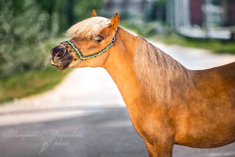 ���� -  ���������� -  equestrian.ru