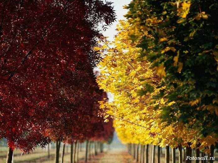Фото природы | Красивые фото и картинки