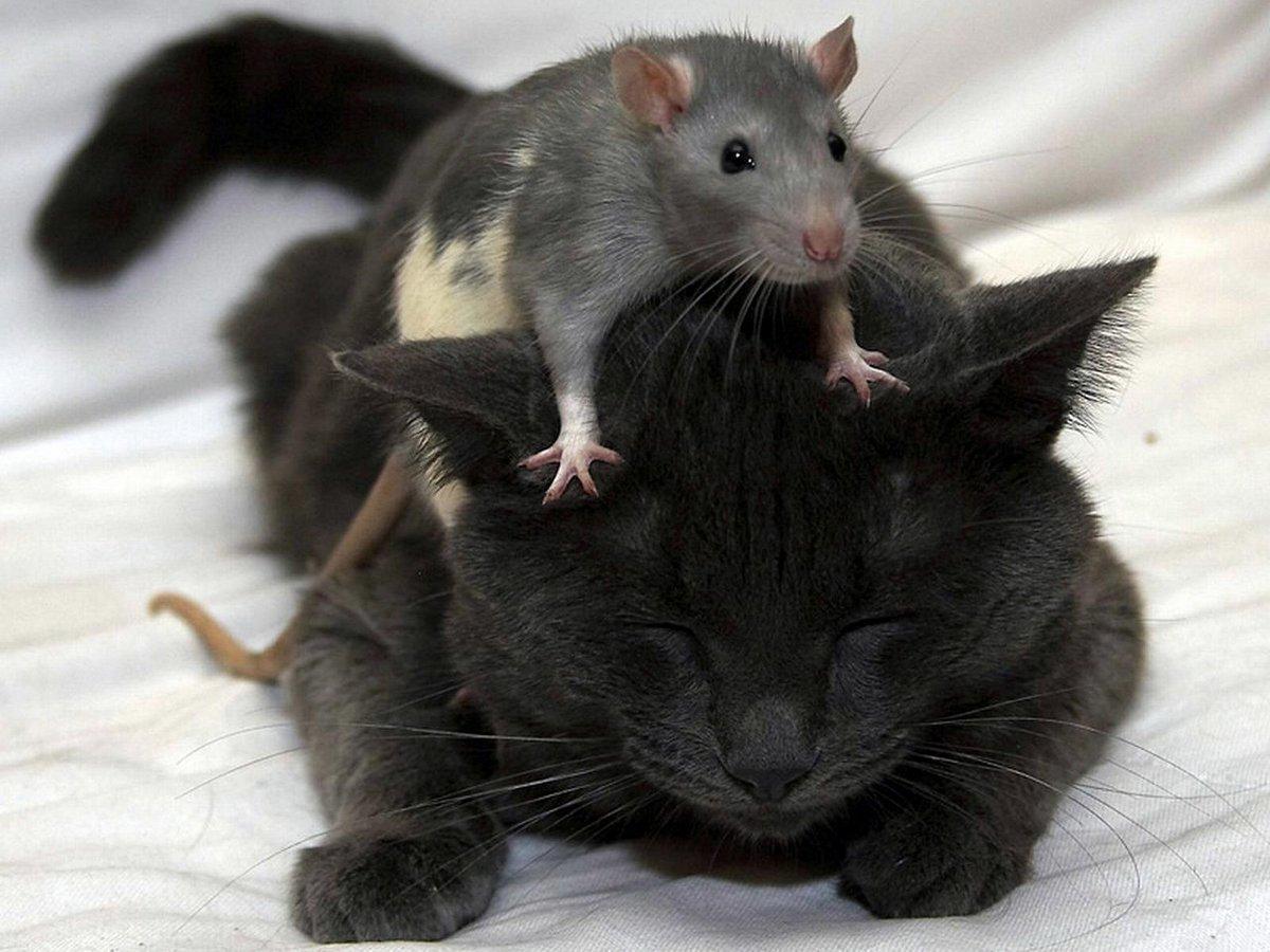Днем, мышь и кот смешные картинки