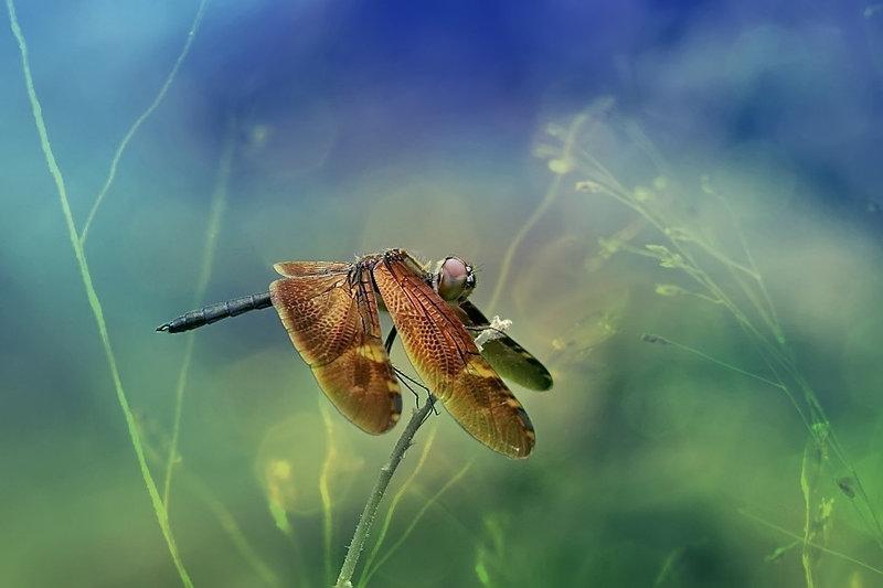 Фото: Syuwandi Sien