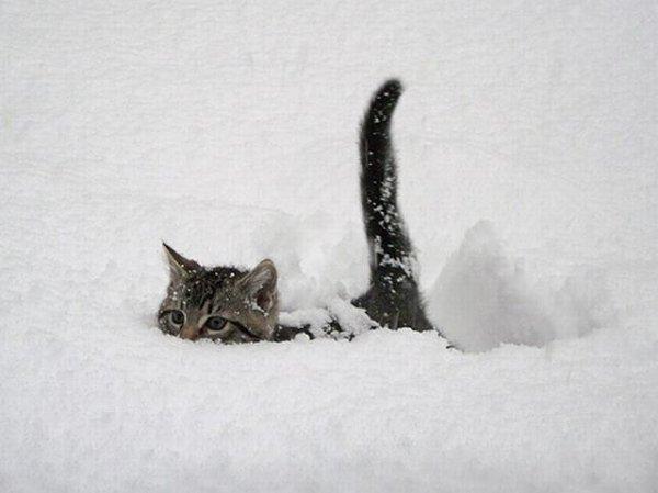 Картинки | Смехокот - смешные фото и видео о кошках
