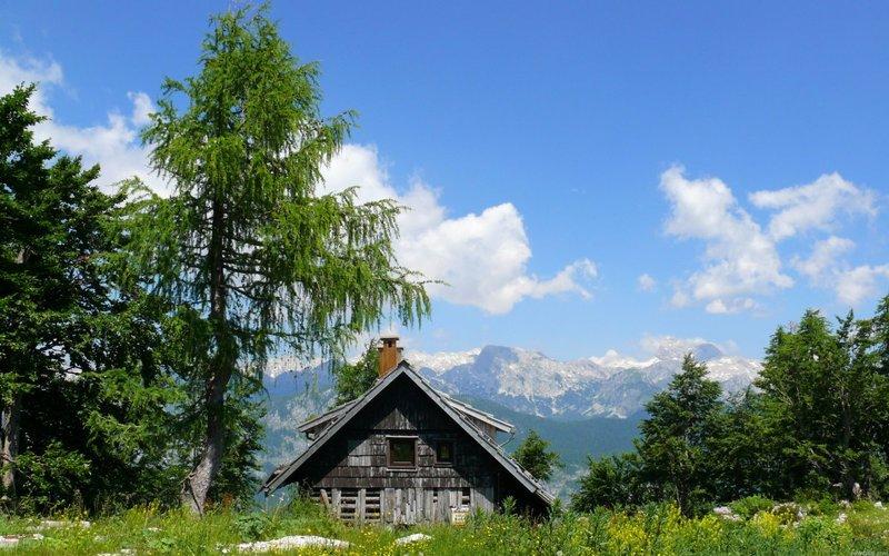 Красивые летние фото природы. Пейзажи, птицы, животные, цветы. » Поржать.ру