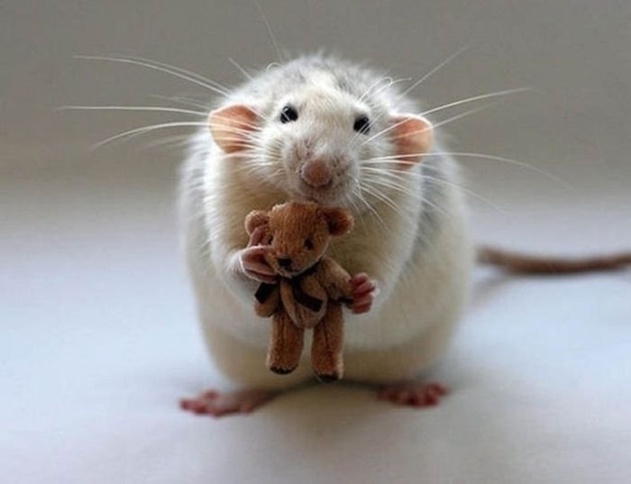 Медвежонок для мышки