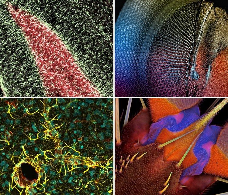 Необычные фотографии под микроскопом