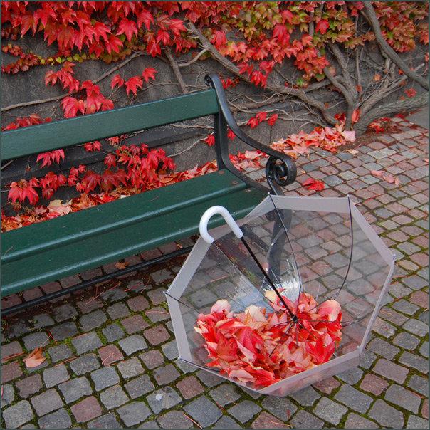 Осенняя фотосессия - идея, 10 фото в разделе Творчество