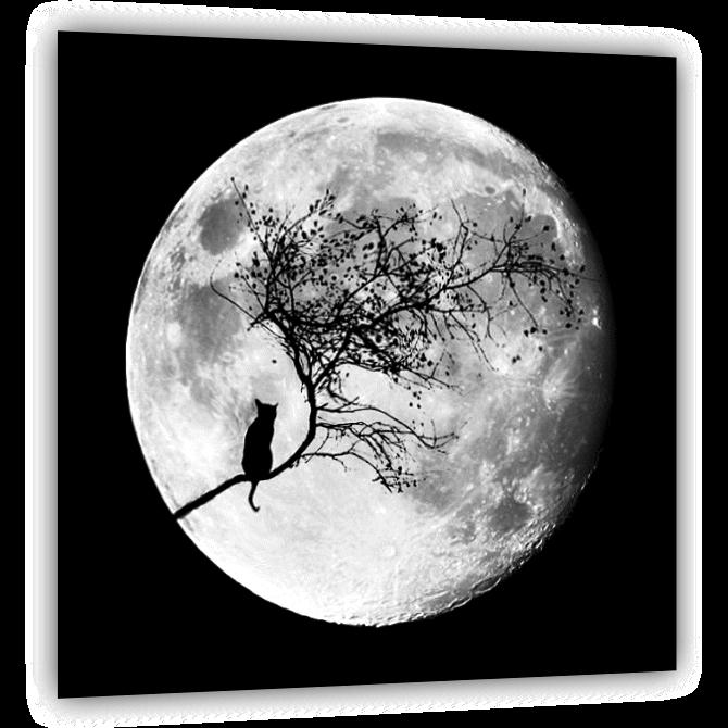 Особенности черно-белого фото | anylemi.com