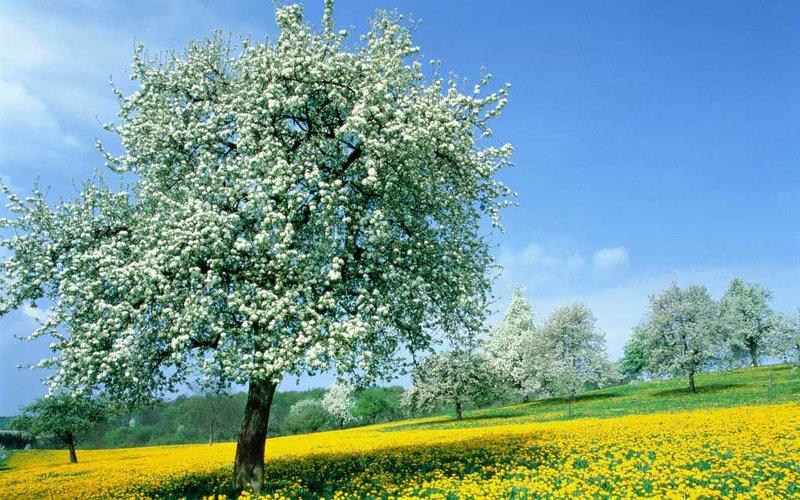 Природа весной, цветы картинки, фото, видео