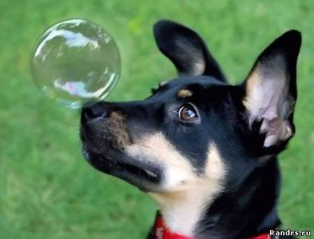 Щенок и мыльный пузырь