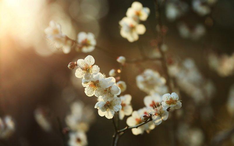 Весна Времена года обои (103 фото) для рабочего стола, скачать картинки на рабочий стол