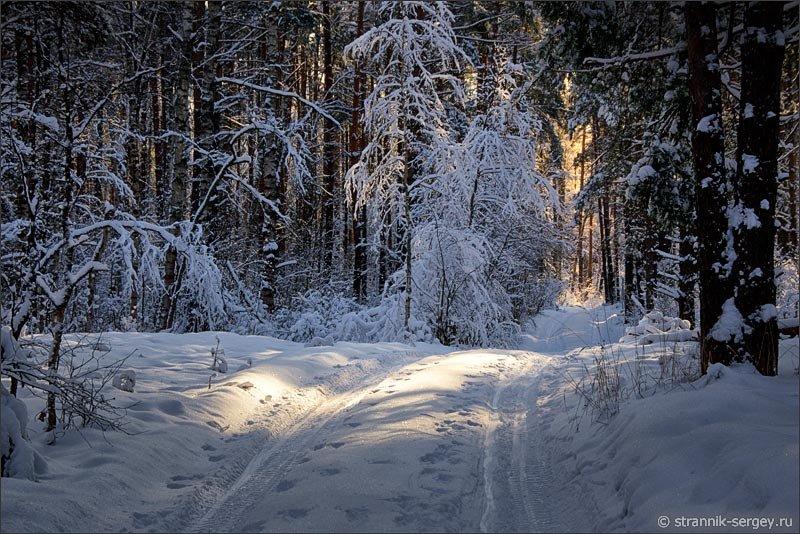 Зимний лес фото картина