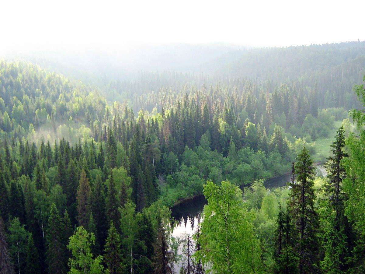 блюдо леса на территории россии картинки тогда насыщенного